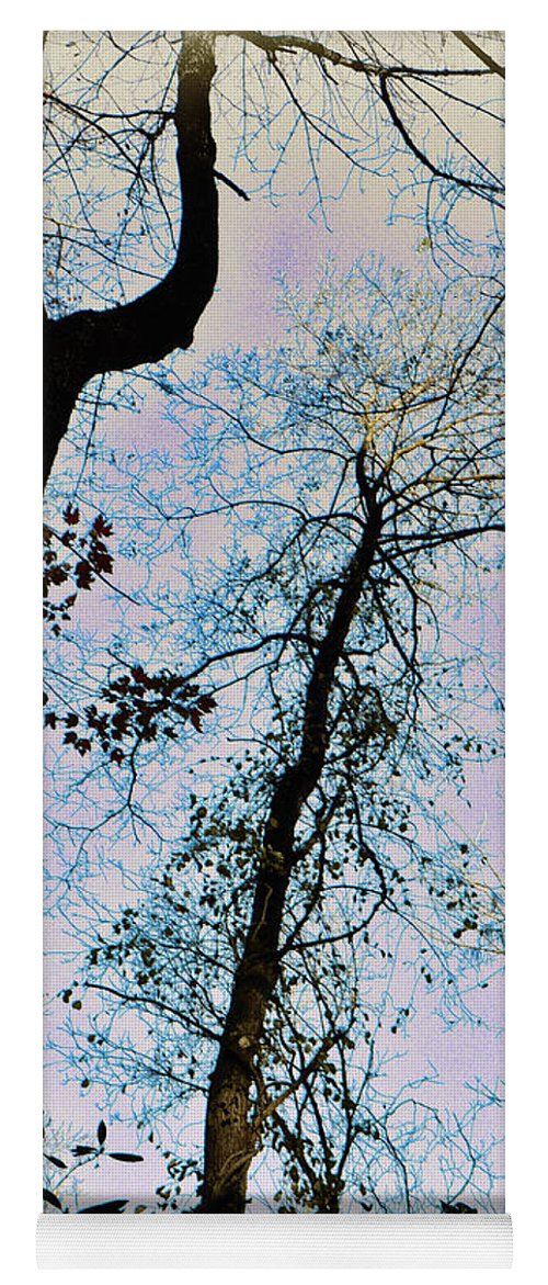 Trees Yoga Mat featuring the photograph Things Are Looking Up by Bill Cannon