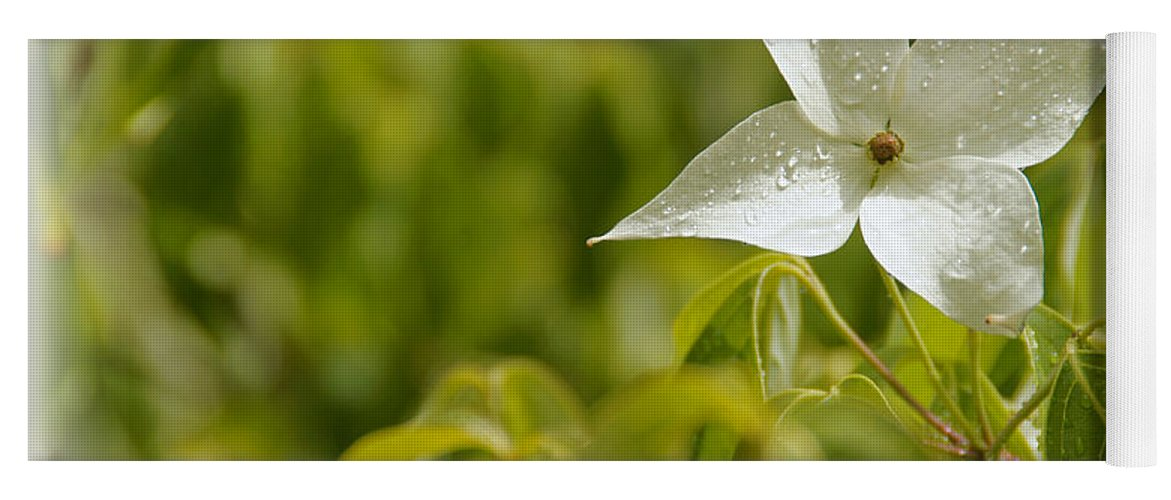 White Yoga Mat featuring the photograph White Dogwood After A June Rain by Mick Anderson