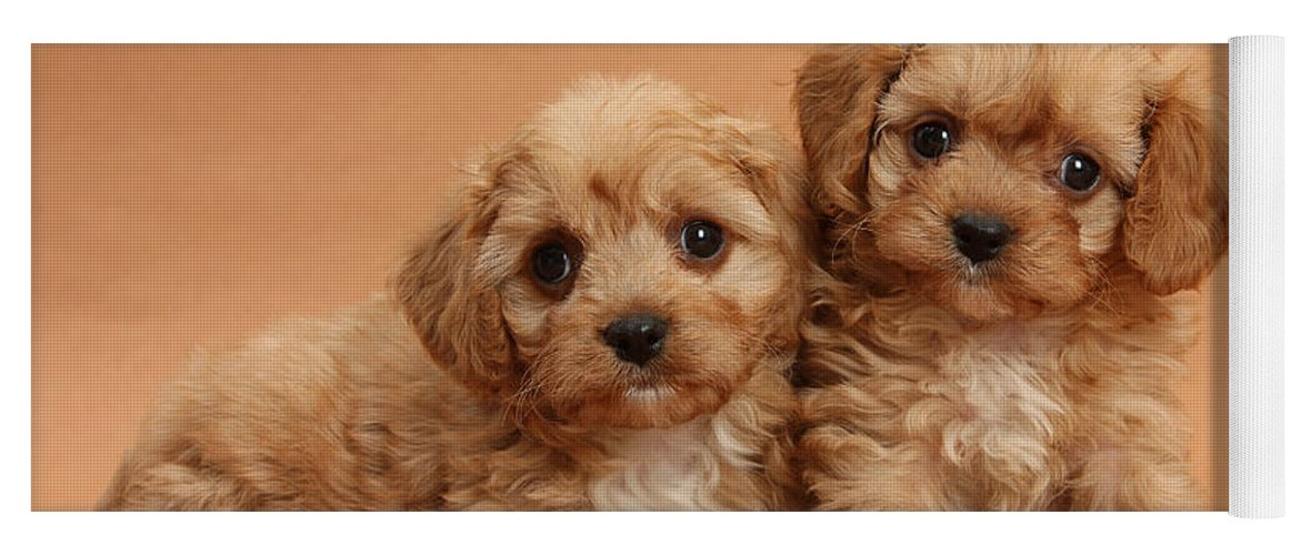 Animal Yoga Mat featuring the photograph Cavapoo Pups by Mark Taylor