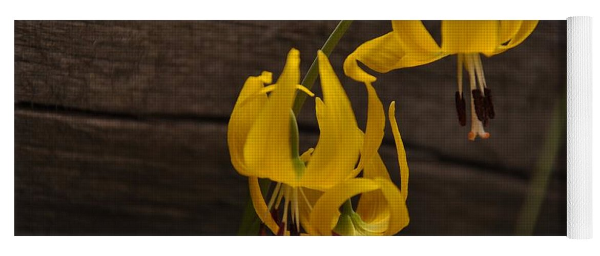 Flower Yoga Mat featuring the photograph Glacier Lily by Frank Madia