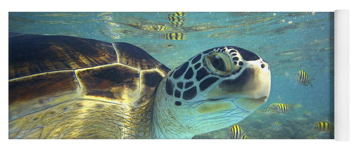 00451417 Yoga Mat featuring the photograph Green Sea Turtle Balicasag Island by Tim Fitzharris