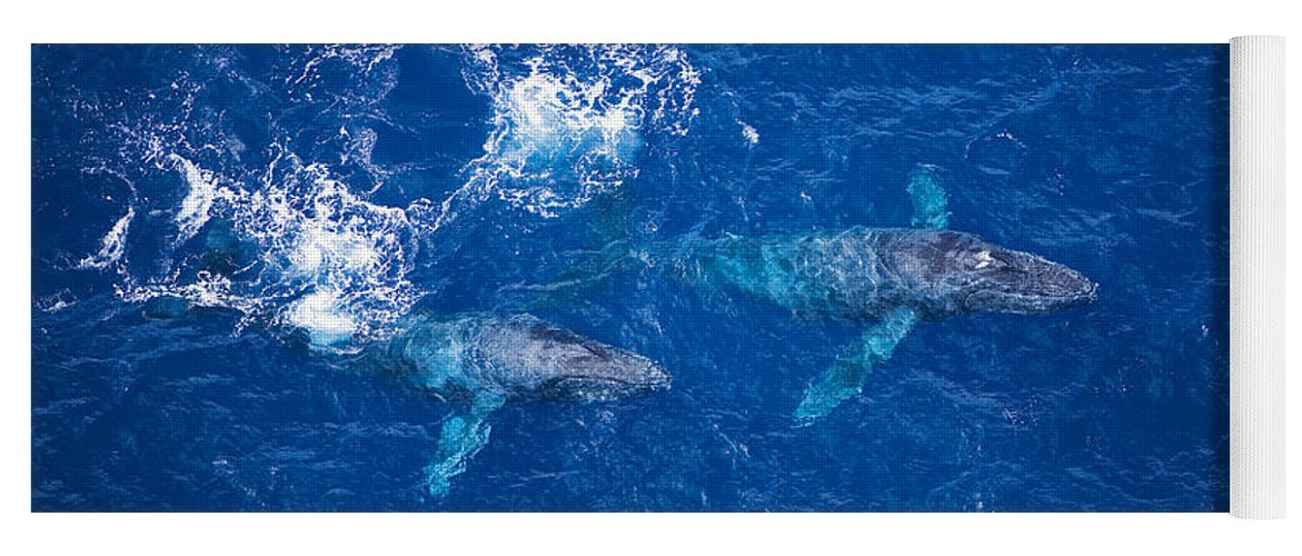 Above Yoga Mat featuring the photograph Humpback Whales Aerial by Ron Dahlquist - Printscapes