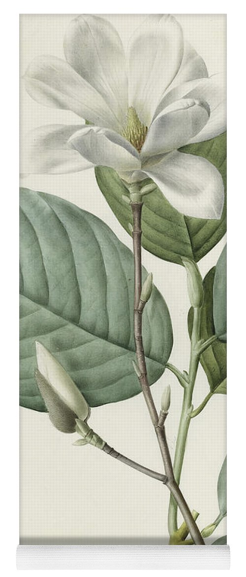 Magnolia Yoga Mat featuring the painting Magnolia by Pierre Joseph Redoute