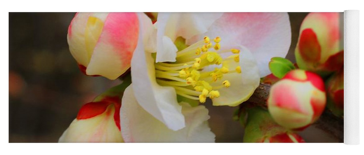 Quince Yoga Mat featuring the photograph Quince Toyo-nishiki by Kathryn Meyer