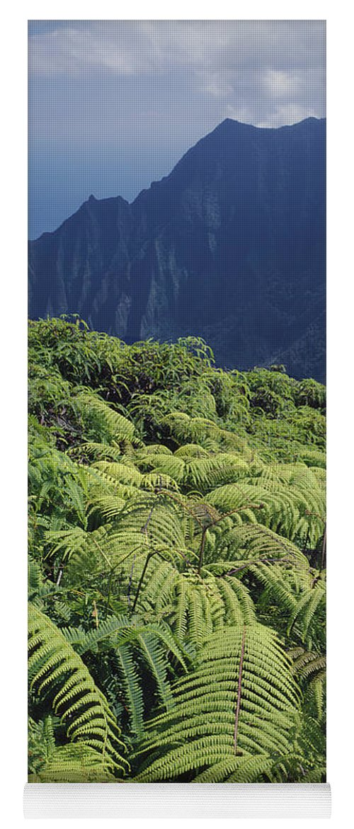 Ferns Yoga Mat featuring the photograph 100139 Amaumau Ferns Hawaii by Ed Cooper Photography