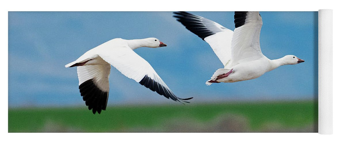 Snow Geese Yoga Mat featuring the photograph Follow The Leader by Mike Dawson