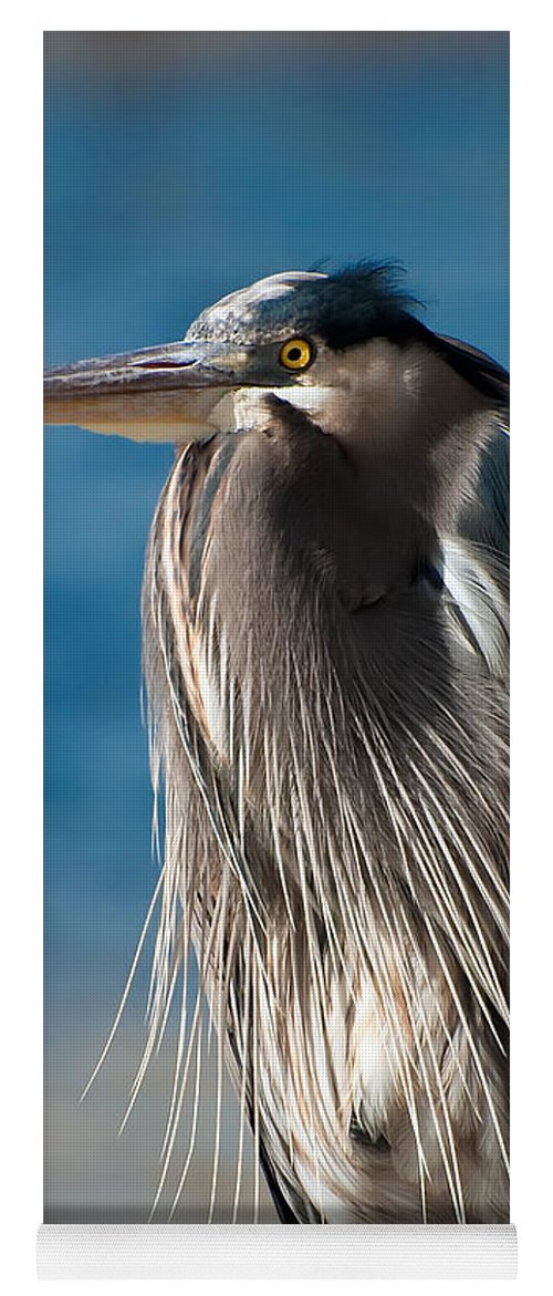 Bird Yoga Mat featuring the photograph Great Blue Heron by Rich Leighton