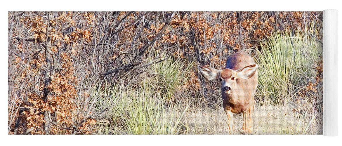 Animal Yoga Mat featuring the photograph Mule Deer Doe by Steve Krull
