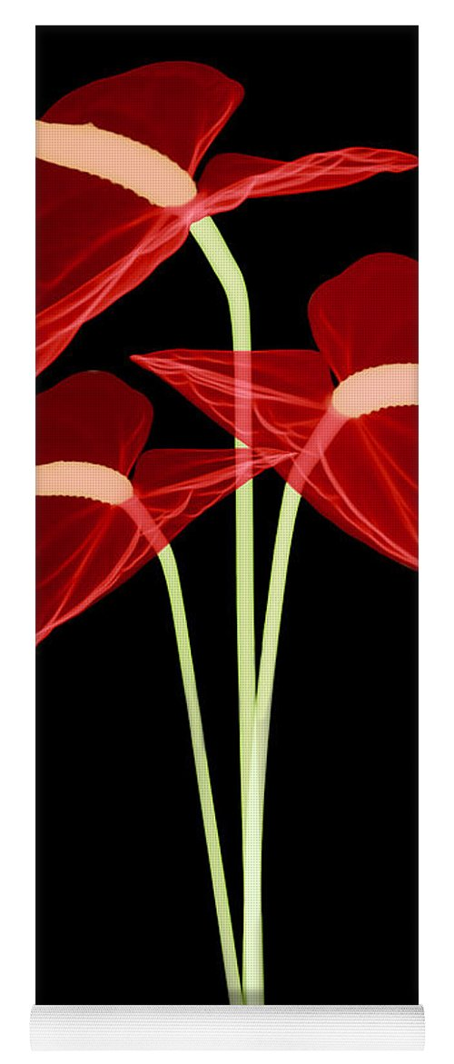 Science Yoga Mat featuring the photograph Anthurium Flowers, X-ray by Ted Kinsman