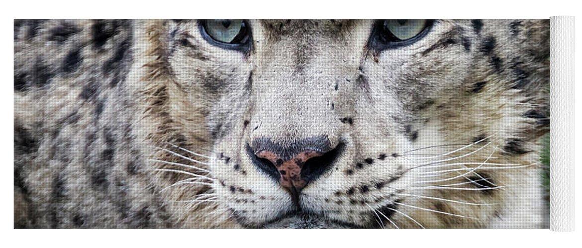 Leopard Yoga Mat featuring the photograph Adult Snow Leopard Portrait by Jane Rix