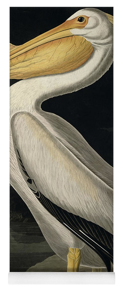 American White Pelican Yoga Mat featuring the painting American White Pelican by John James Audubon