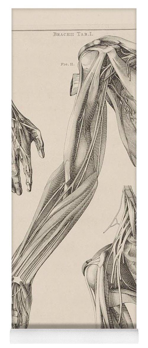 anatomie van de hand