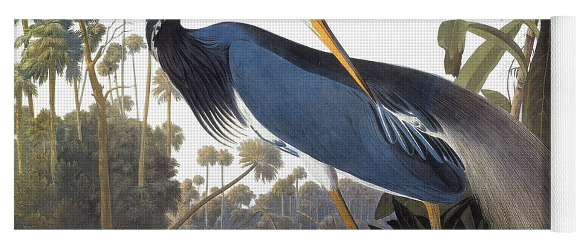 1827 Yoga Mat featuring the photograph Audubon Heron, 1827 by John James Audubon