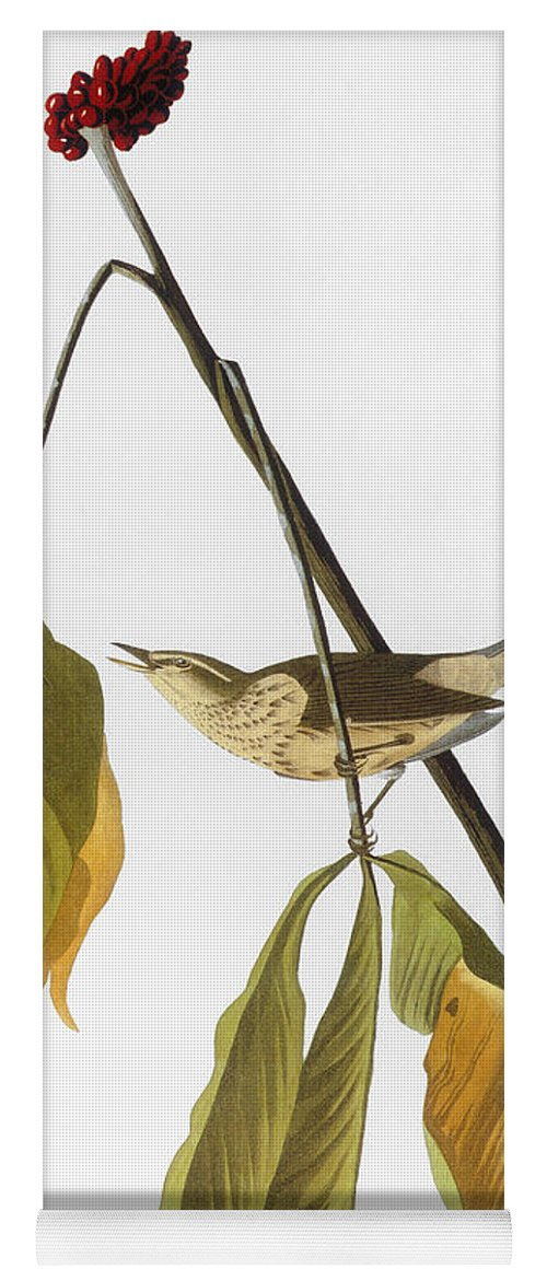 1827 Yoga Mat featuring the photograph Audubon: Thrush, 1827 by Granger