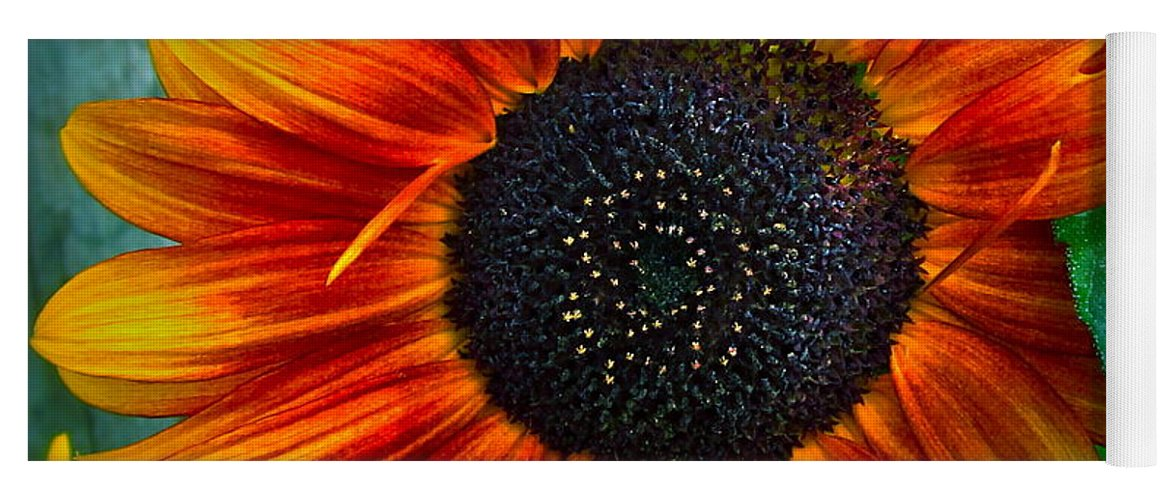 Sunflower Yoga Mat featuring the photograph Autumn Blessing by Gwyn Newcombe
