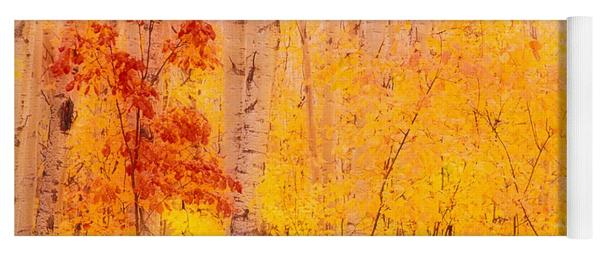 Photography Yoga Mat featuring the photograph Autumn Forest Wbirch Trees Canada by Panoramic Images