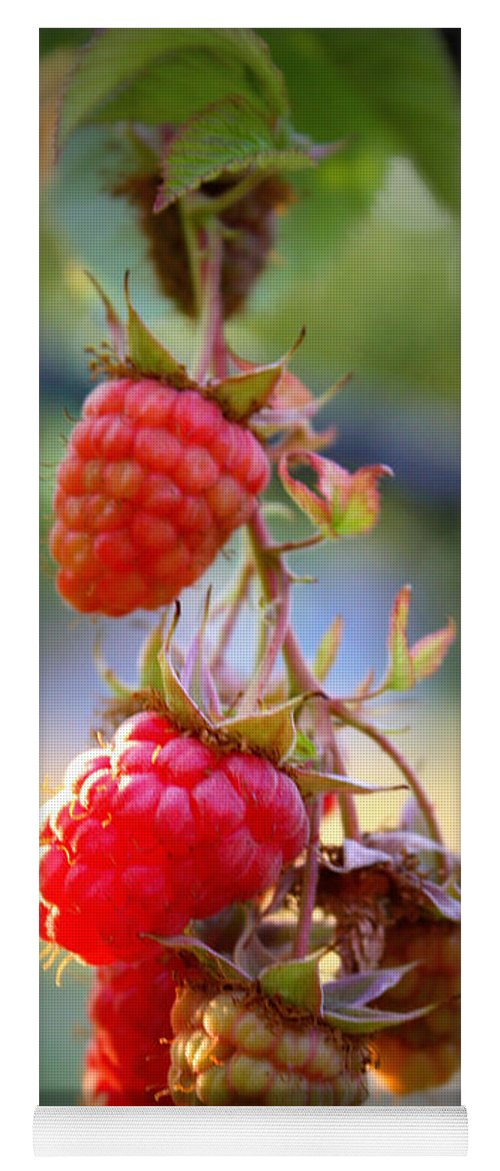 Food And Beverage Yoga Mat featuring the photograph Backyard Garden Series - The Freshest Raspberries by Carol Groenen