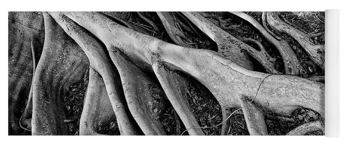 Banyan Tree Yoga Mat featuring the photograph Banyan Roots by Mick Burkey