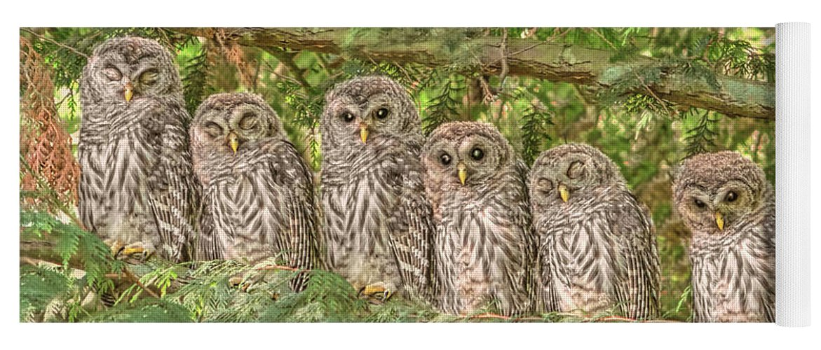 Owl Yoga Mat featuring the photograph Barred Owlets Nursery by Jennie Marie Schell