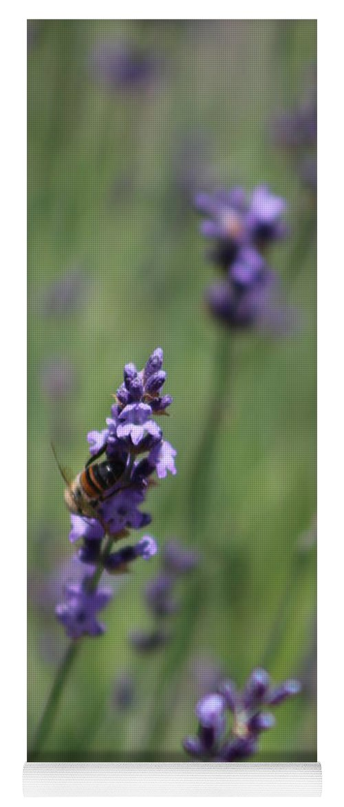 Deep Purple Lavender Yoga Mat featuring the photograph Bee on Deep Purple Lavender Spike by Colleen Cornelius