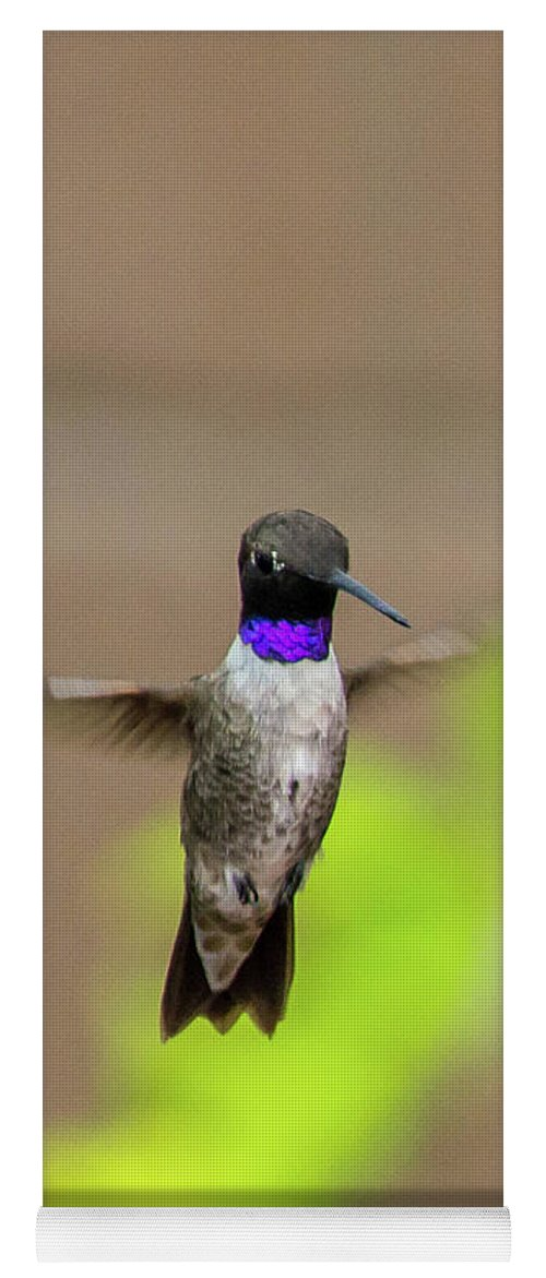 Hummingbird Yoga Mat featuring the photograph Black Chinned Hummingbird by Stephen Whalen