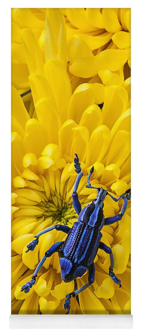 Blue Yoga Mat featuring the photograph Blue Bug On Yellow Mum by Garry Gay