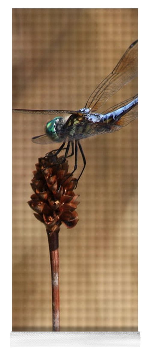 Dragonfly Yoga Mat featuring the photograph Blue Dragonfly On Brown Reed by Carol Groenen