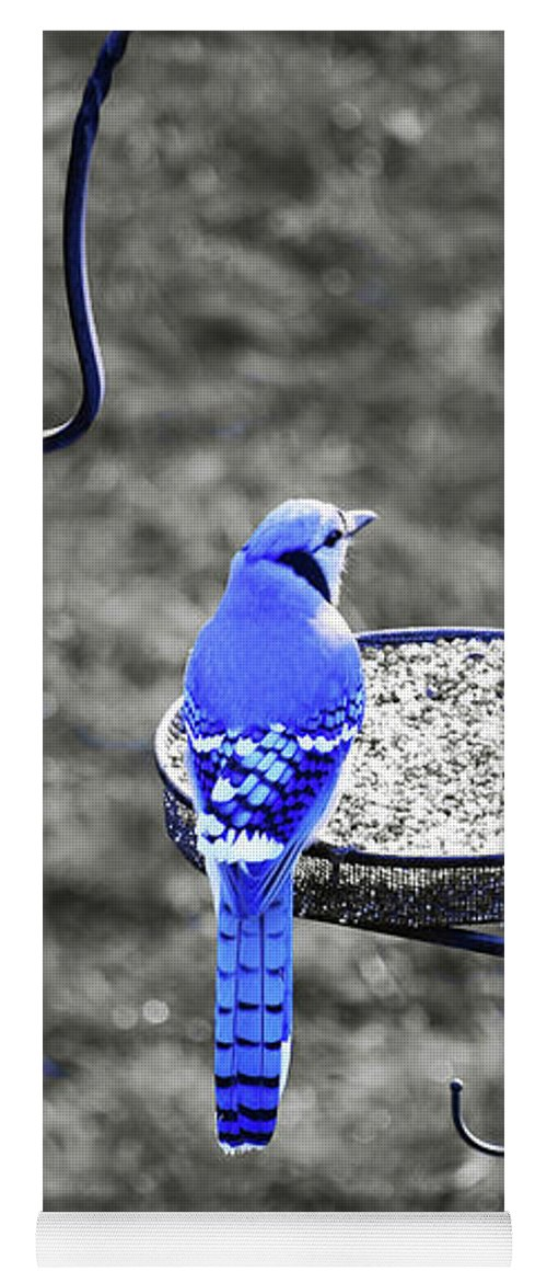 Blue Jay Yoga Mat featuring the photograph Blue Jay by Patti Whitten