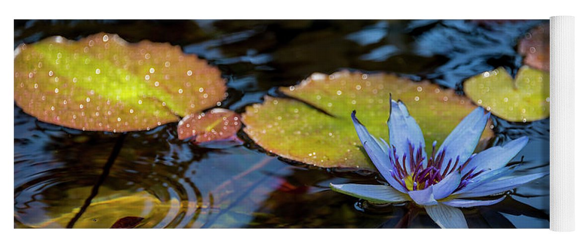 Blue Water Lily Flower Pond Yoga Mat featuring the photograph Blue Water Lily Pond by Brian Harig