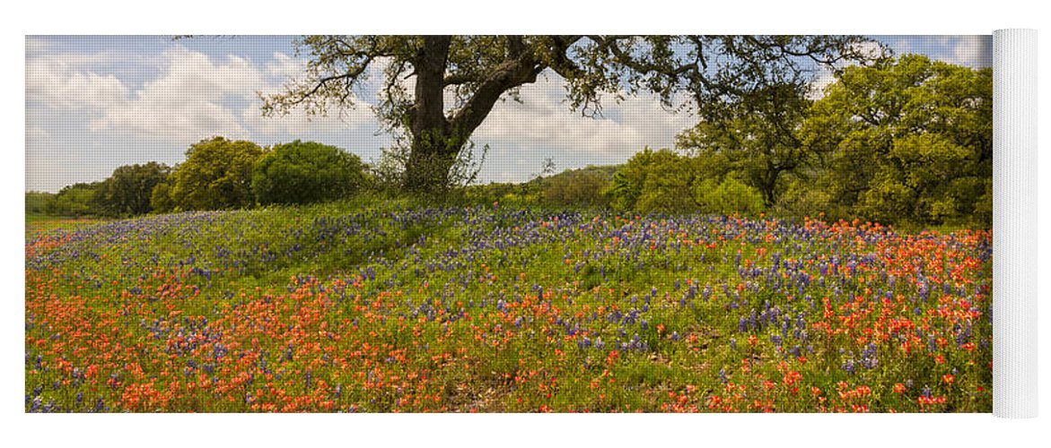 Bluebonnet Yoga Mat featuring the photograph Bluebonnets Paintbrush And An Old Oak Tree - Texas Hill Country by Brian Harig
