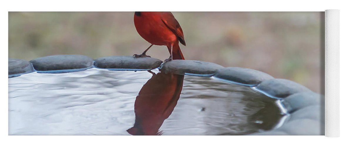 Terry Deluco Yoga Mat featuring the photograph Cardinal Reflection by Terry DeLuco