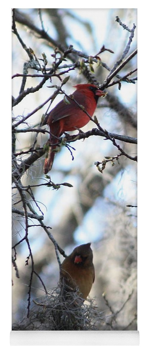 Wildlife Yoga Mat featuring the photograph Cardinals In Mossy Tree by Carol Groenen