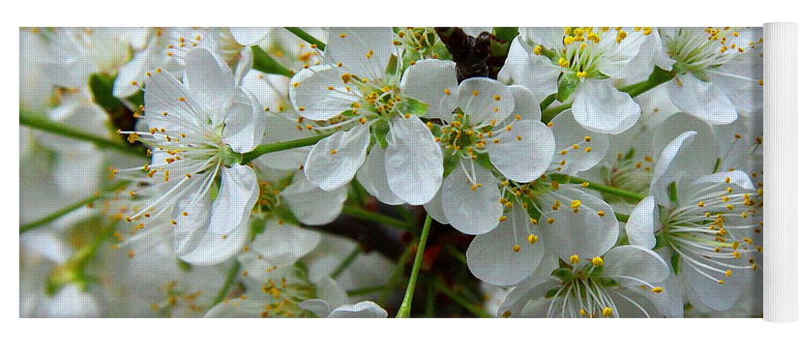 Chickasaw Plum Yoga Mat featuring the photograph Chickasaw Plum Blooms by Barbara Bowen