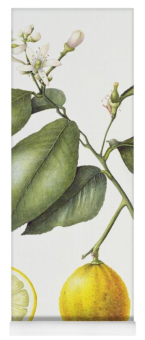 Fruit; Still Life; Branch; Half; Halved; Cross Section; Botanical; Seeds; Study; Flower; Flowering; Citrus; Bergamot; Leaf; Leafs Yoga Mat featuring the painting Citrus Bergamot by Margaret Ann Eden