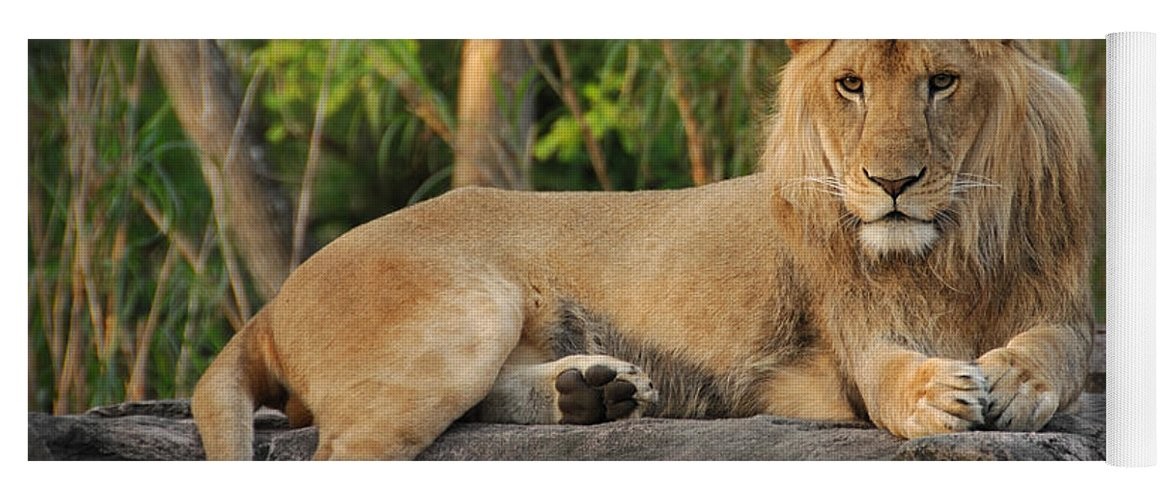 Lion Yoga Mat featuring the photograph Classic Young Male by Steven Sparks