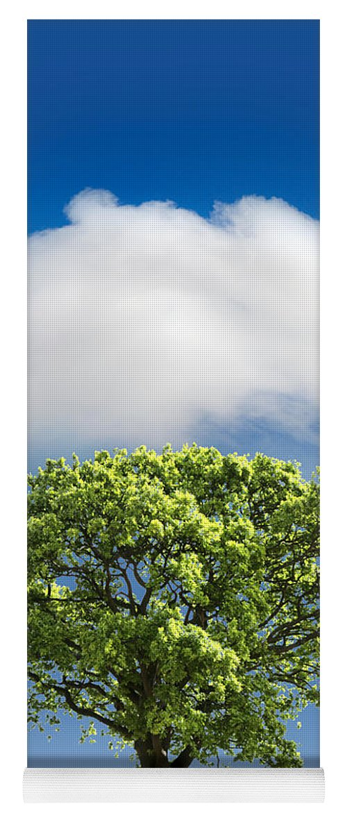 Tree Yoga Mat featuring the photograph Cloud Cover by Mal Bray