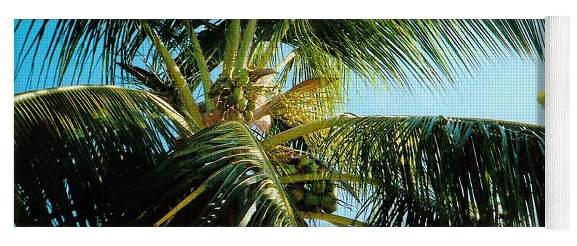 Jamaica Yoga Mat featuring the photograph Coconut Tree by Debbie Levene