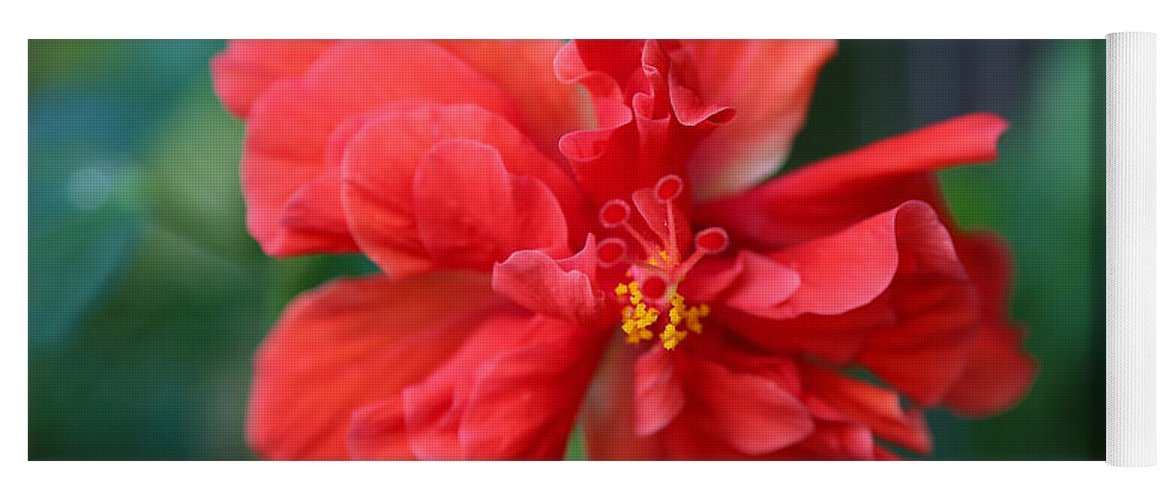 Hibiscus Yoga Mat featuring the photograph Colors Of The Tropics Hibiscus by Carol Groenen