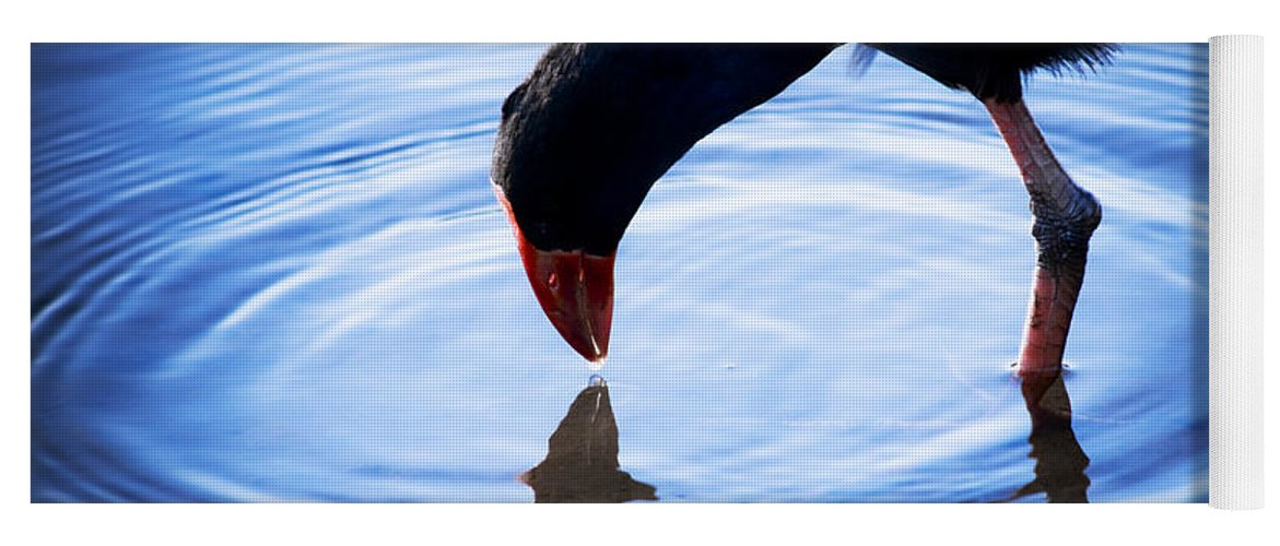 Wildlife Yoga Mat featuring the photograph Coot Pond Droplet by Jorgo Photography - Wall Art Gallery