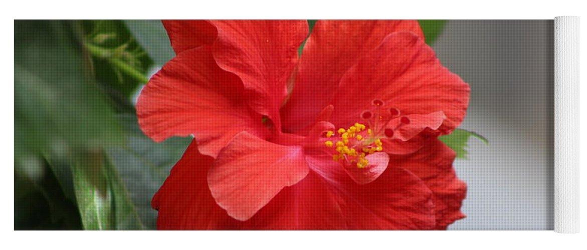 Crimson Red Hibiscus Flower Yoga Mat featuring the photograph Crimson Red Hibiscus in Desert Sun by Colleen Cornelius