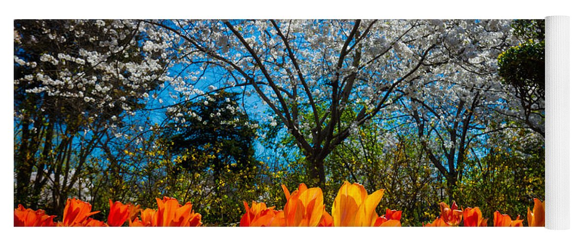 America Yoga Mat featuring the photograph Dallas Arboretum Tulips And Cherries by Inge Johnsson