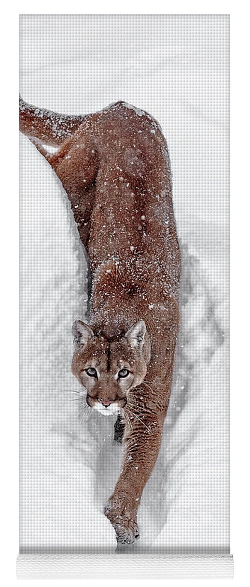 Deep Snow Cougar Yoga Mat featuring the photograph Deep Snow Cougar by Wes and Dotty Weber