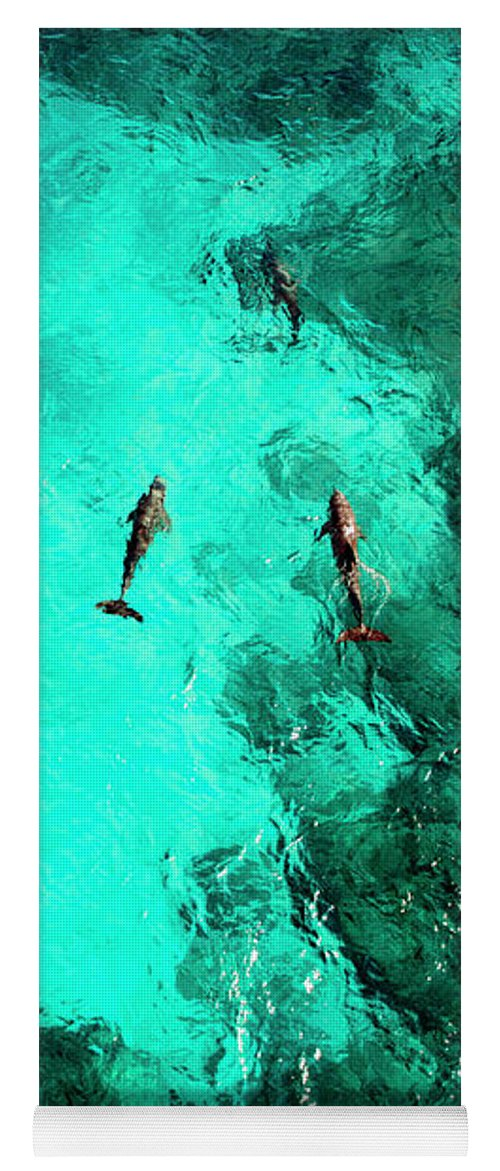 Isla Mujeres Yoga Mat featuring the photograph Dolphins on Isla Mujeres - Punta Sur, Aerial Image by David Daniel