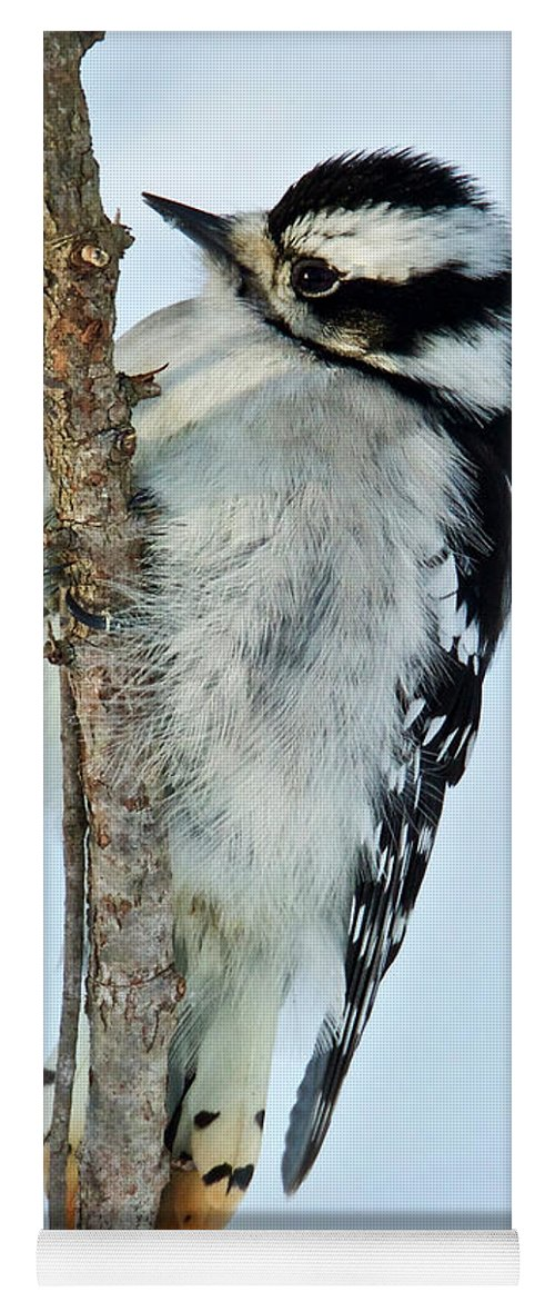 Female Yoga Mat featuring the photograph Downey Woodpecker 013 by Michael Peychich