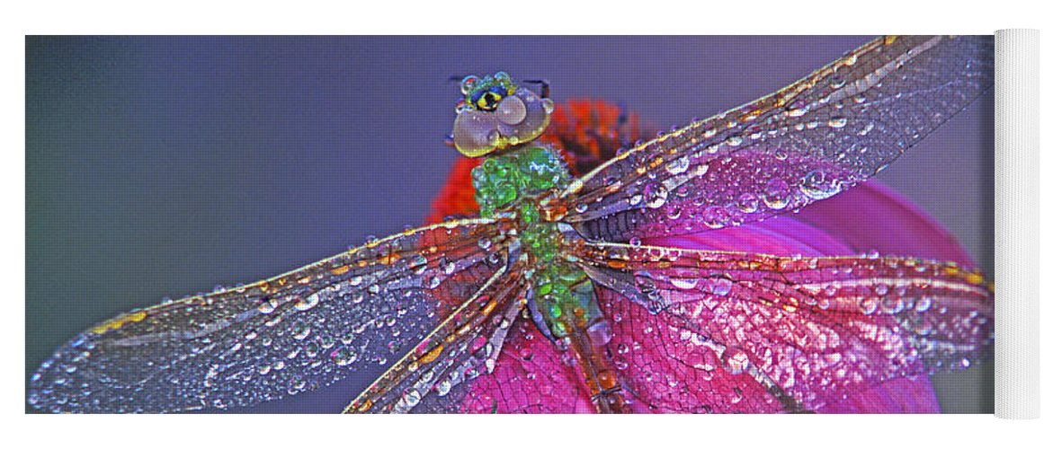 Dew Covered Dragonfly Rests On Purple Cone Flower Yoga Mat featuring the photograph Dreaming Dragon by Bill Morgenstern