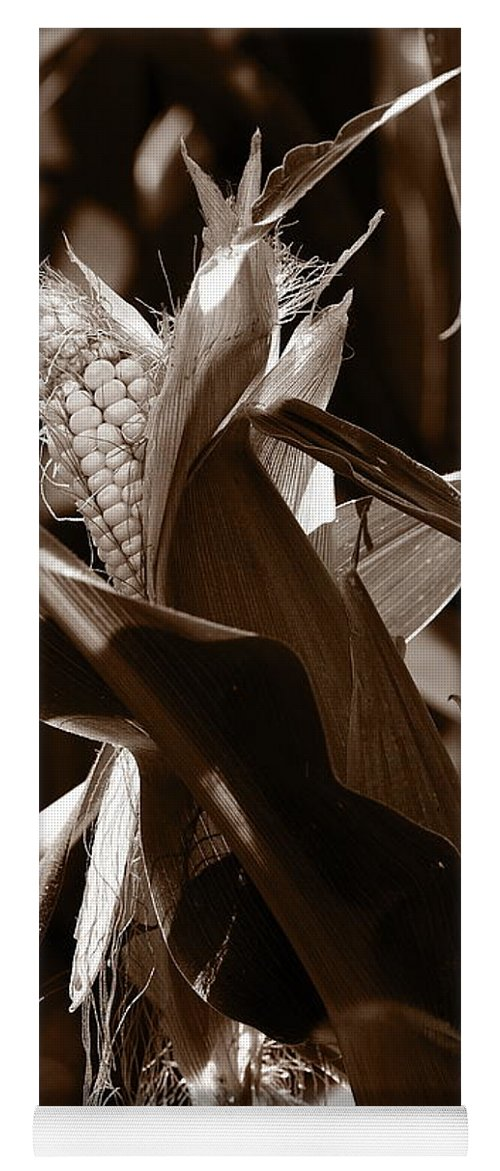 Farm Yoga Mat featuring the photograph Ears To You Corn - Sepia by Angela Rath