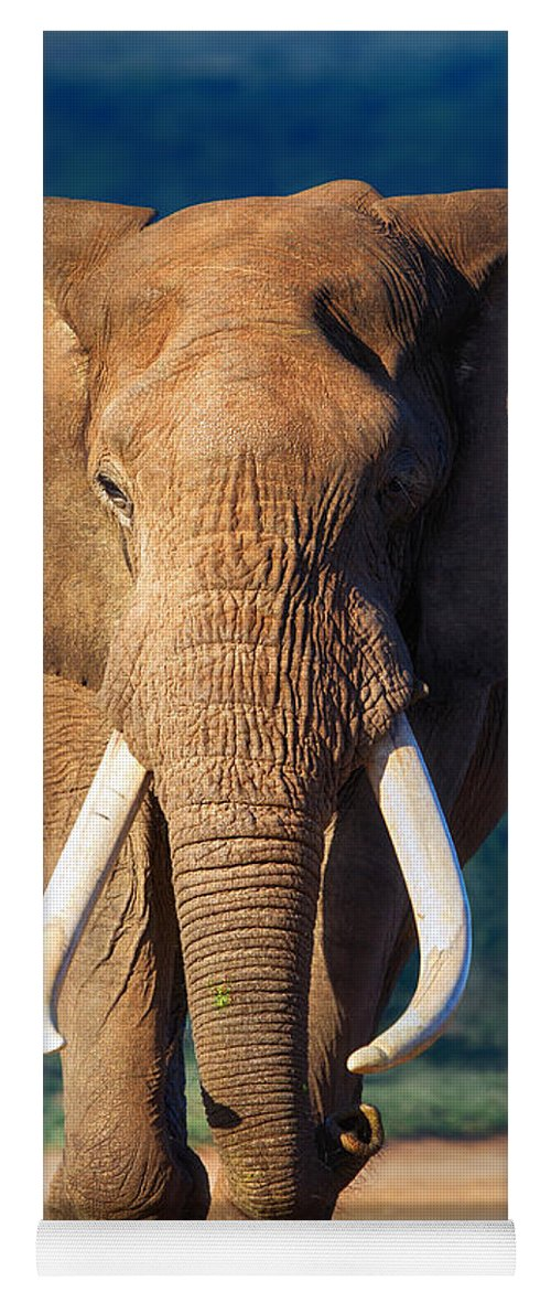 Elephant Yoga Mat featuring the photograph Elephant Approaching by Johan Swanepoel