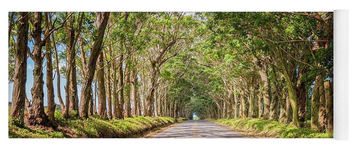 Tree Tunnel Kauai Hawaii Yoga Mat featuring the photograph Eucalyptus Tree Tunnel - Kauai Hawaii by Brian Harig