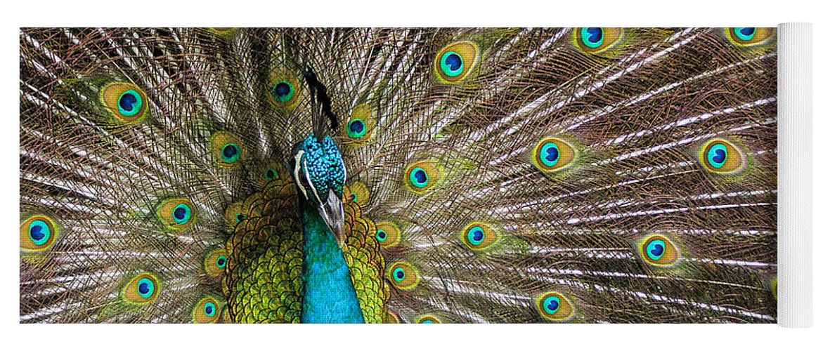 Avian Yoga Mat featuring the photograph Fanfare by Alana Thrower