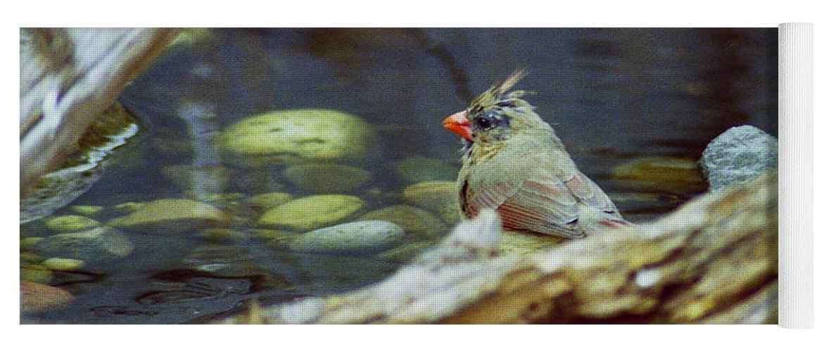 Female Yoga Mat featuring the photograph Female Cardinal by Michael Peychich